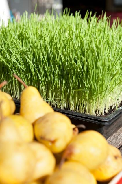Namastay Wheatgrass Superfood Yogaretreat